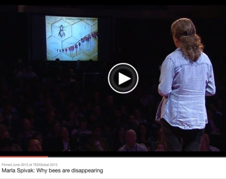 colony collapse disorder disappearing bees nashville artist maria spivak ted talk