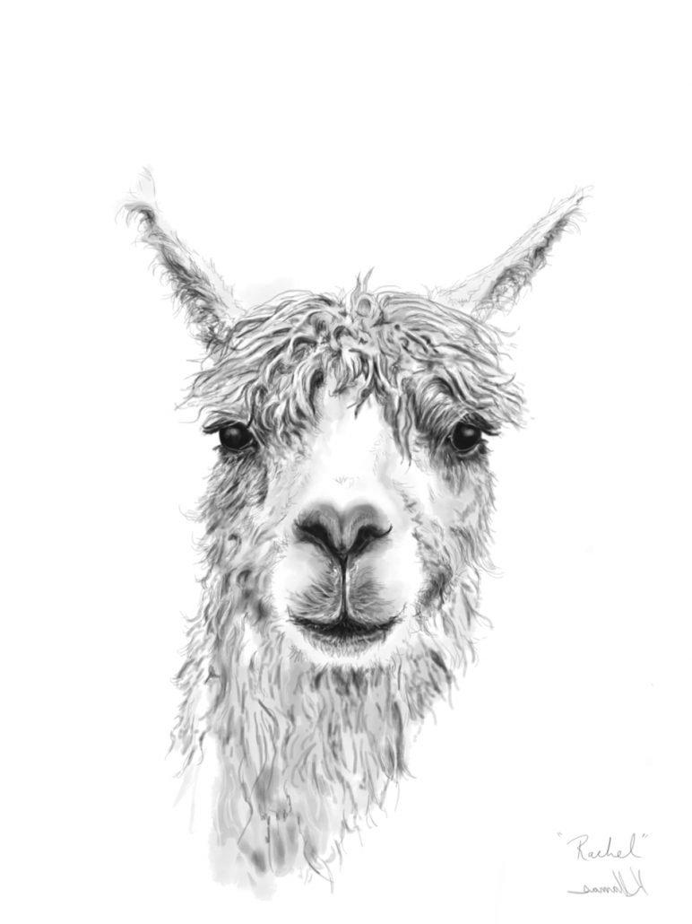 k llamas llama drawing art print