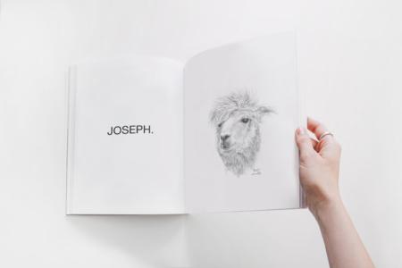 llamas art show book